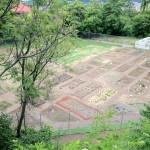 garden-june-2012