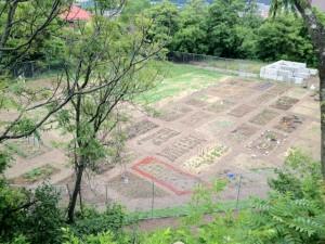Bandi Schaum Community Garden Plots